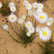 Fauna And Flora Surveys 1