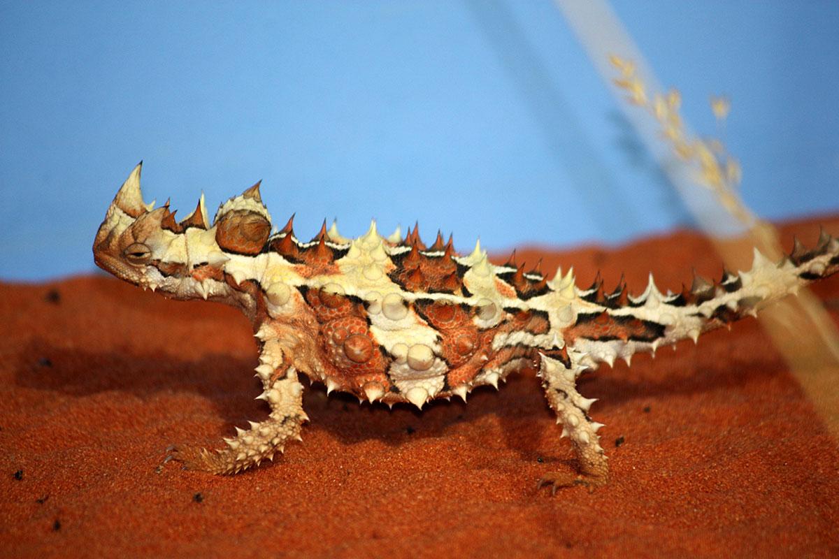 Fauna And Flora Surveys 5 EcoPlan Australia