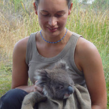 Koala Management And Research 3