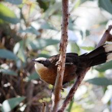 Fauna And Flora Surveys 13