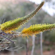Fauna And Flora Surveys 14