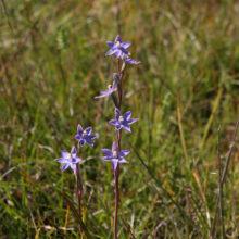 Fauna And Flora Surveys 15