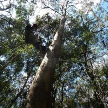 Arboreal Services 4